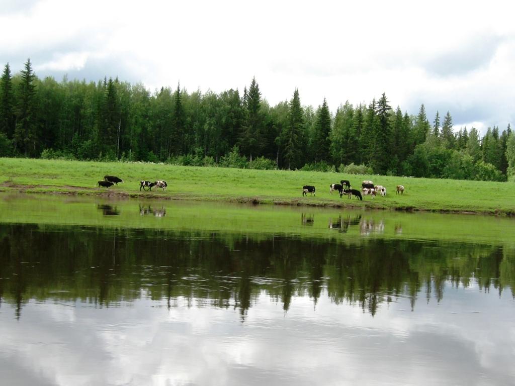 рыбалка в красноярском крае на линка