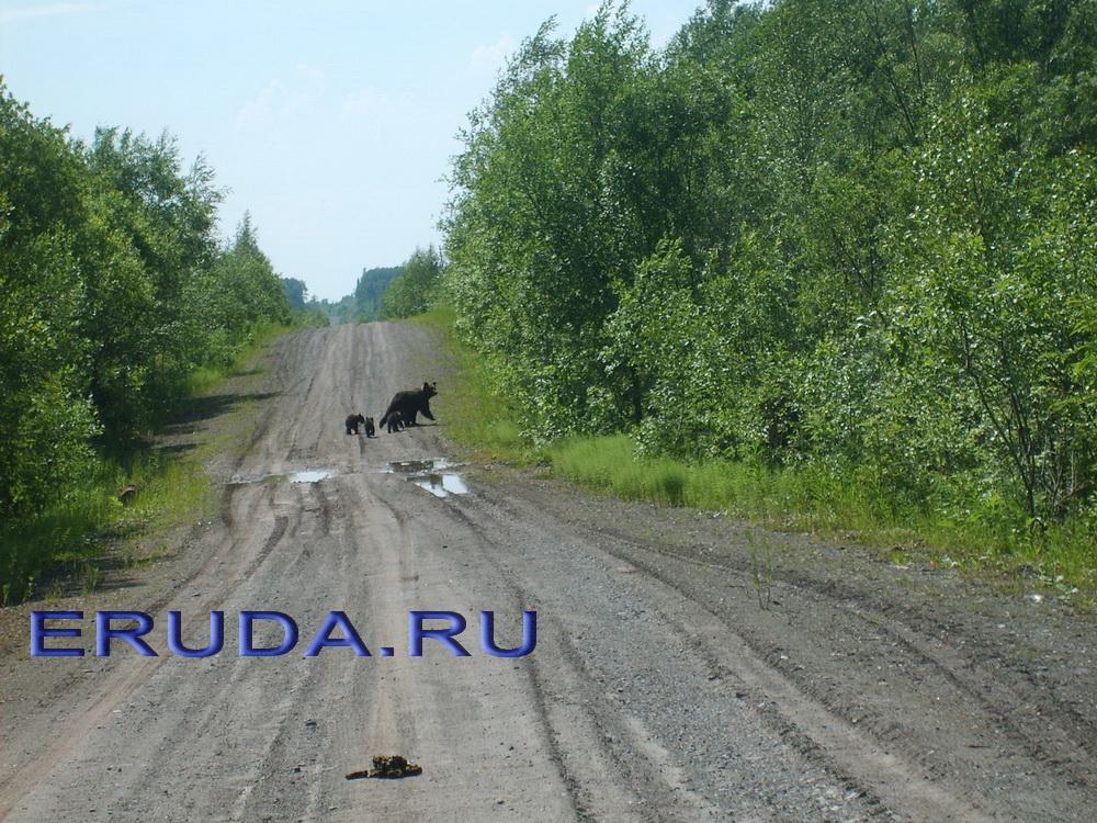 Работа и вакансии «Амур Золото» в Хабаровскe